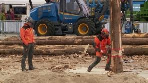 Holzbau, Forst und mehr